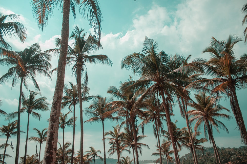 green palm trees near body of water during daytime