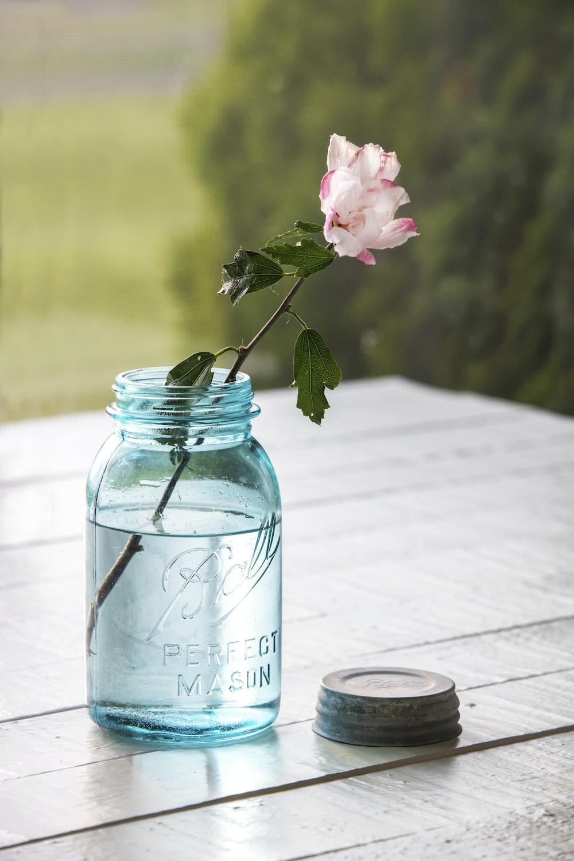 pink flower in blue glass bottle