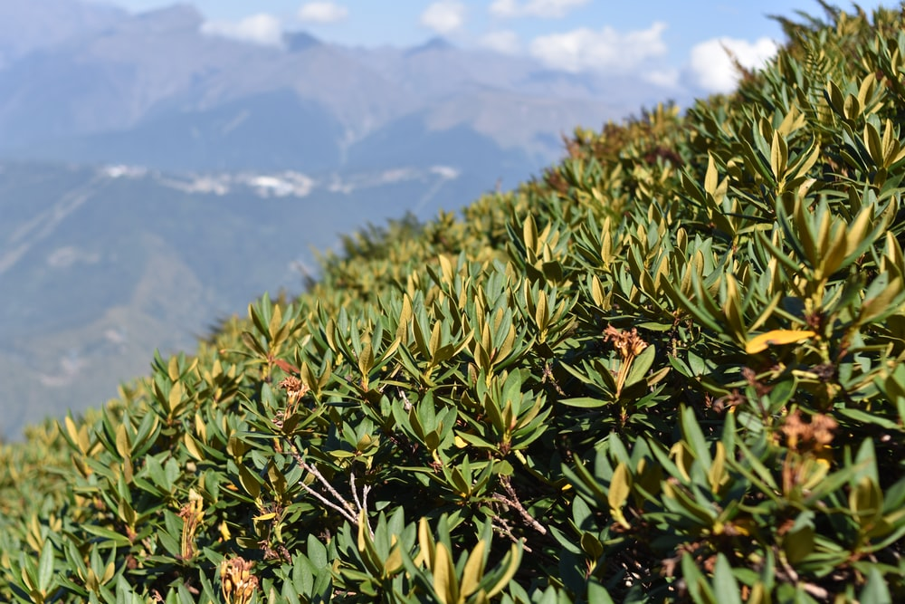 green plant on mountain during daytime