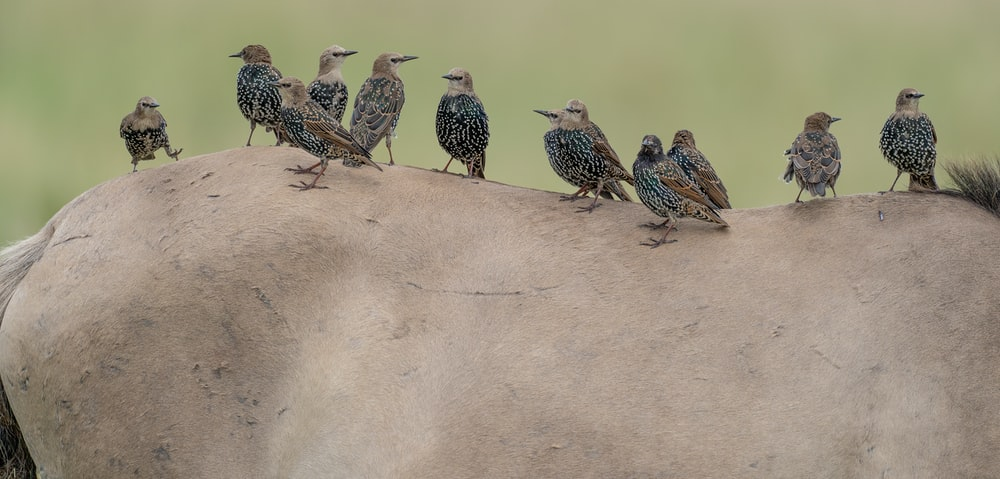three birds on brown sand during daytime