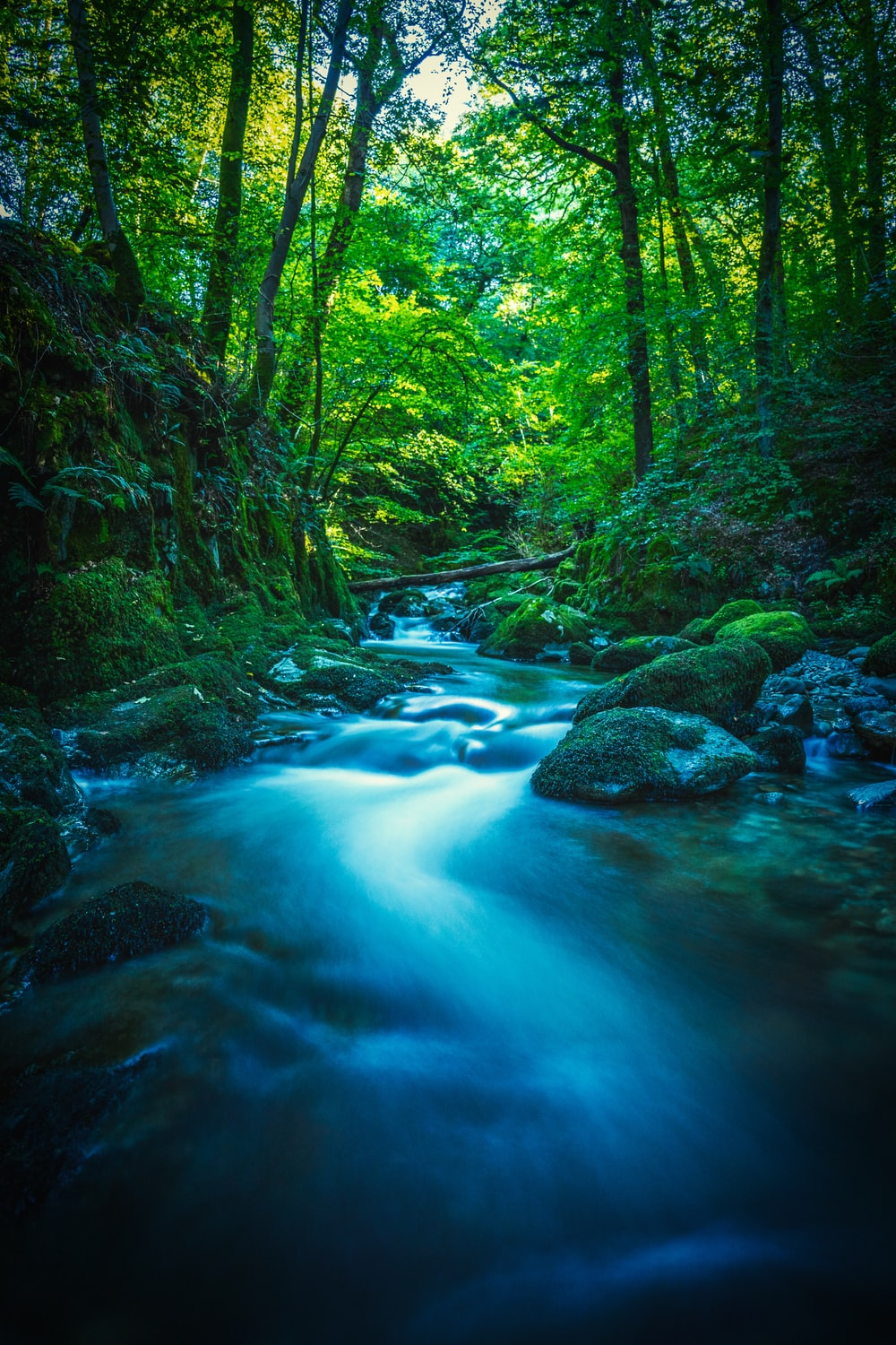 green river in the middle of forest during daytime