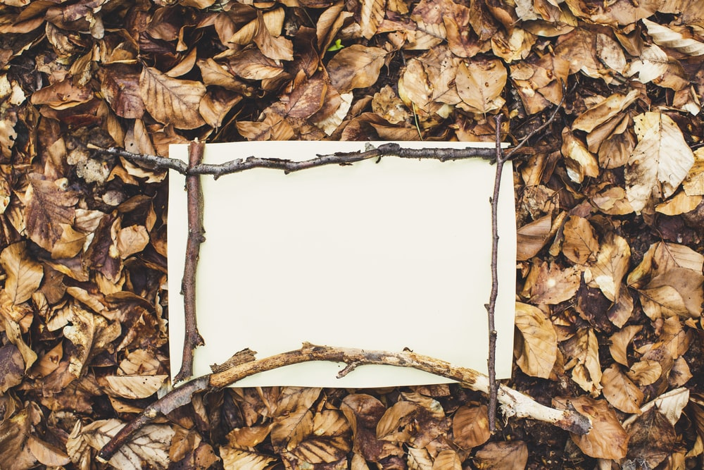 white printer paper on brown dried leaves