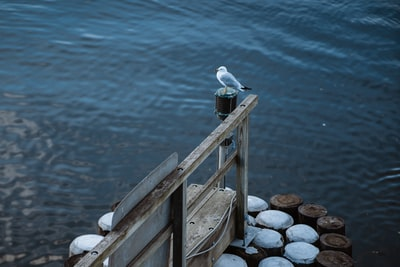 white and gray bird on brown wooden dock during daytime connecticut teams background
