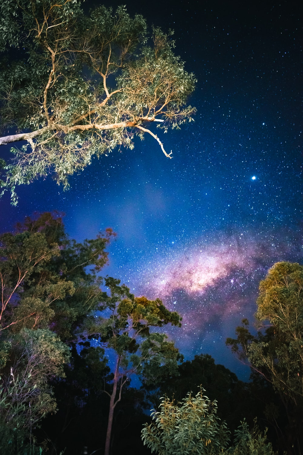 green trees under blue sky with stars during night time