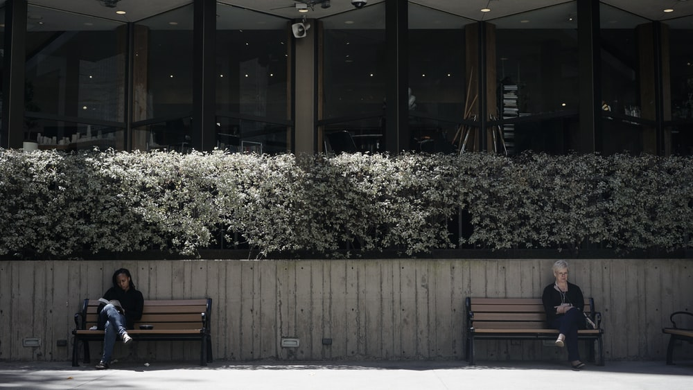 brown wooden bench near white flowers