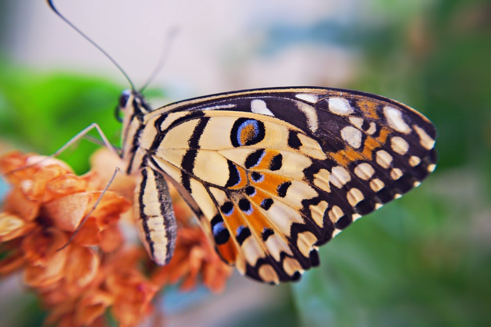 black and yellow butterfly perched on orange flower in close up photography during daytime