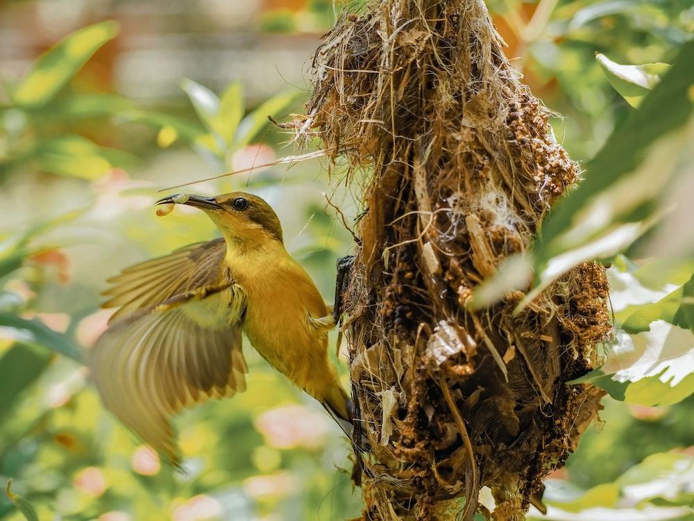 yellow bird on brown nest during daytime
