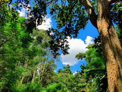 Ranchi green trees under blue sky during daytime