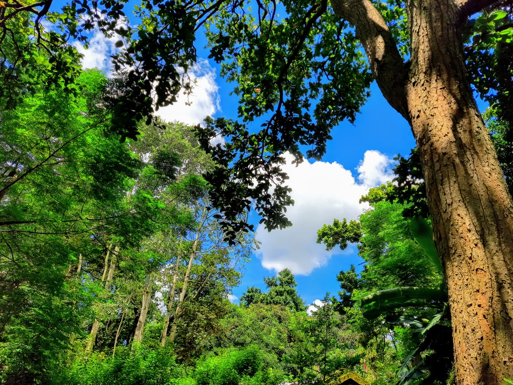 green trees under blue sky during daytime