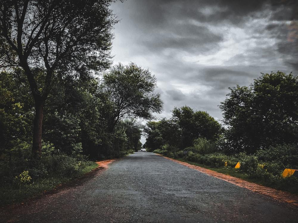 gray asphalt road between green trees under gray cloudy sky