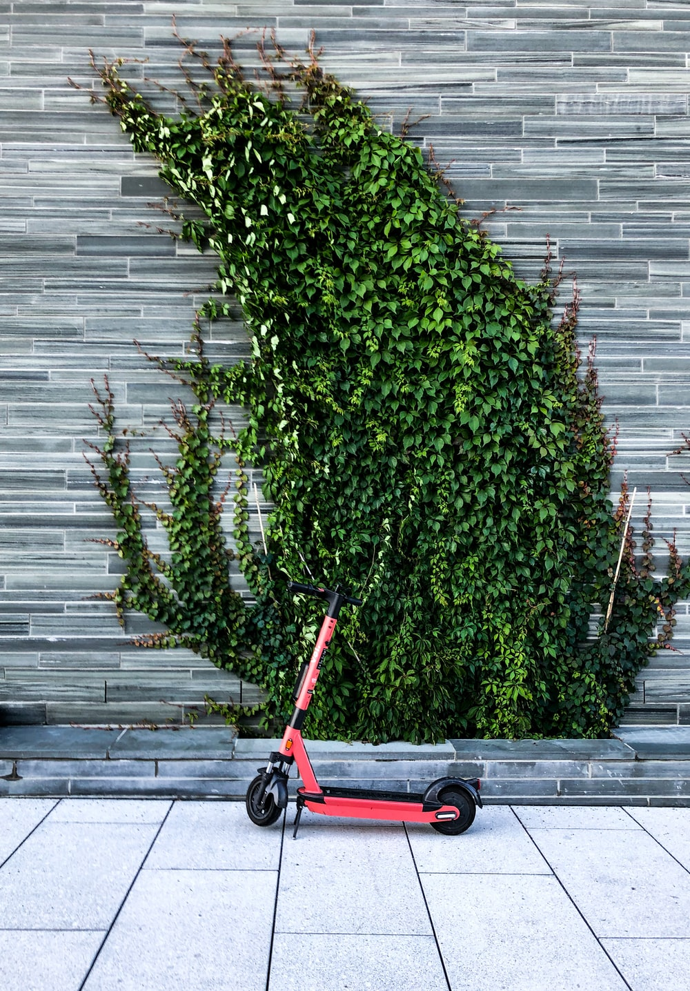 red and black stroller beside green plant