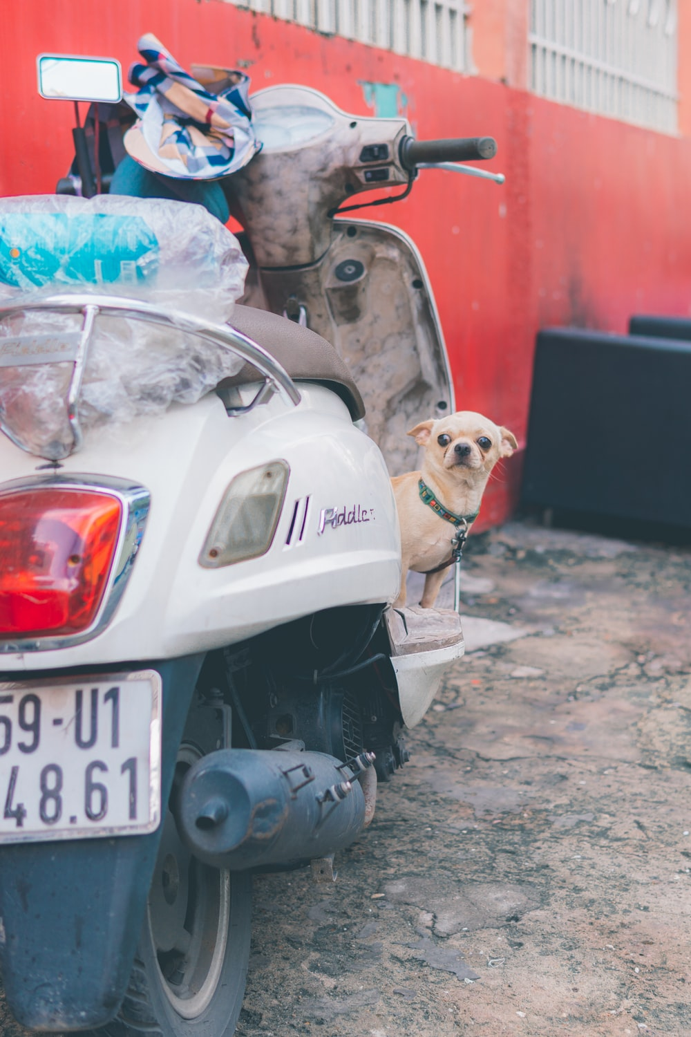 white and brown short coated dog on black motorcycle