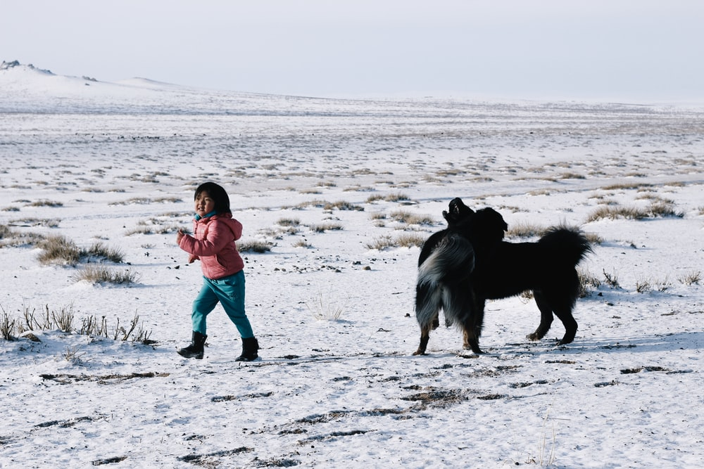 girl in blue jacket and black pants walking on snow covered field with black dog during