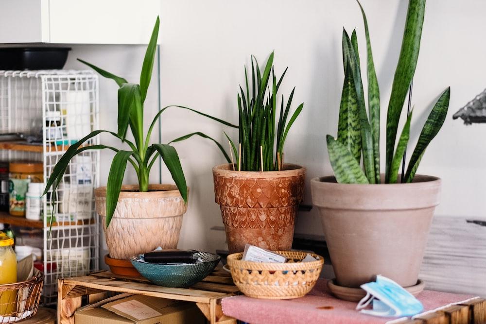 зеленое растение в горшке на коричневом деревянном столе