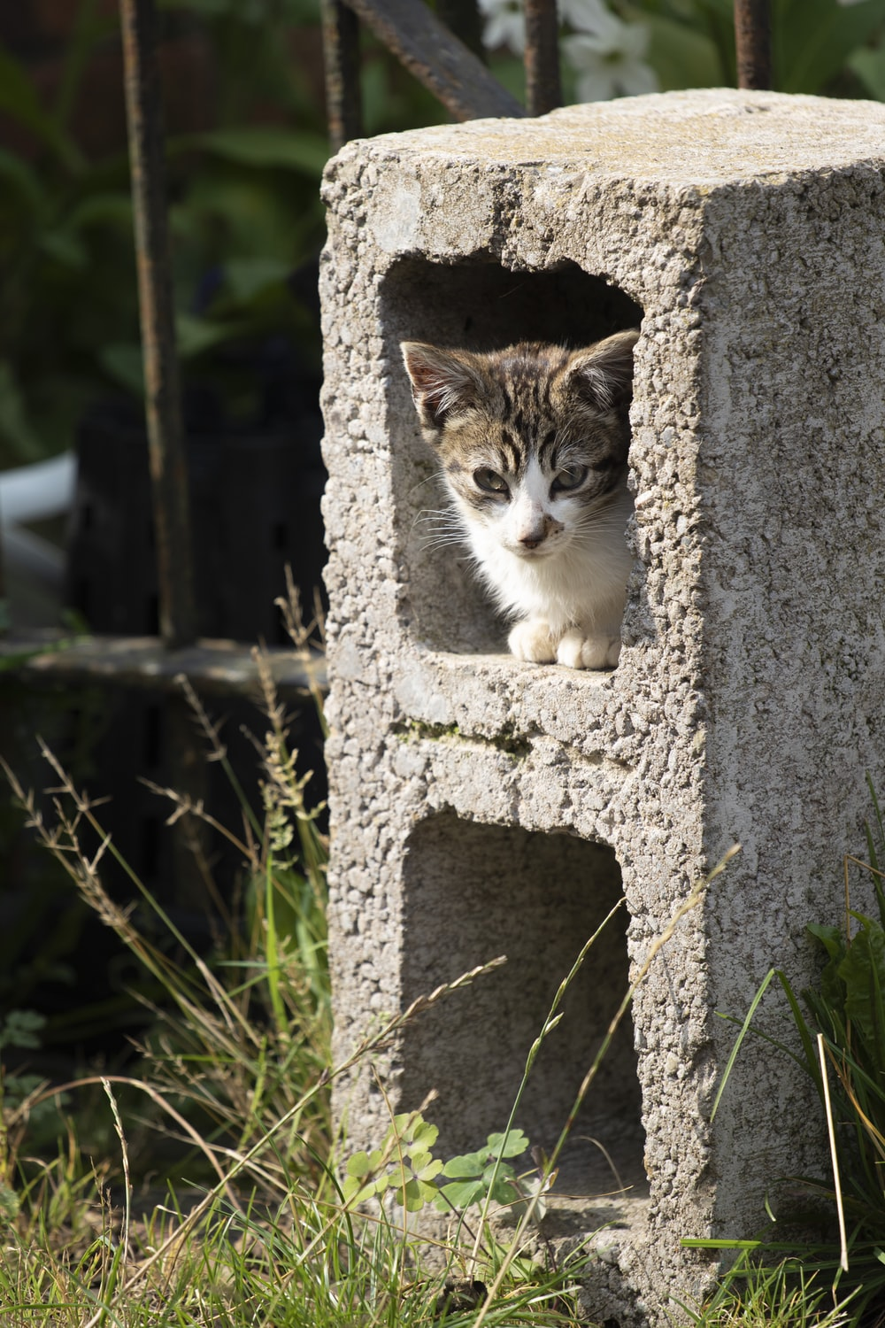 white and brown tabby cat on gray concrete wall