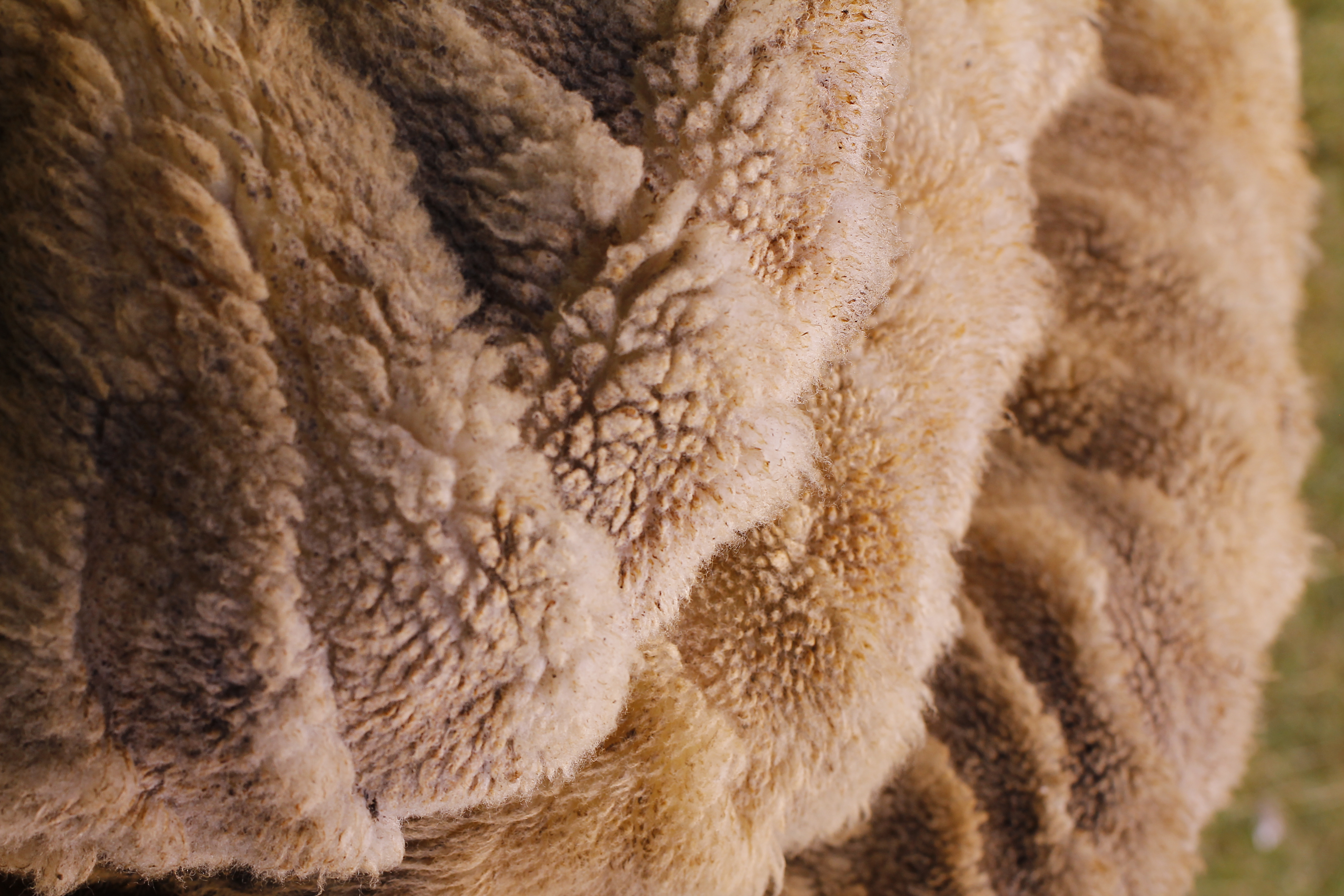 white and brown fur textile