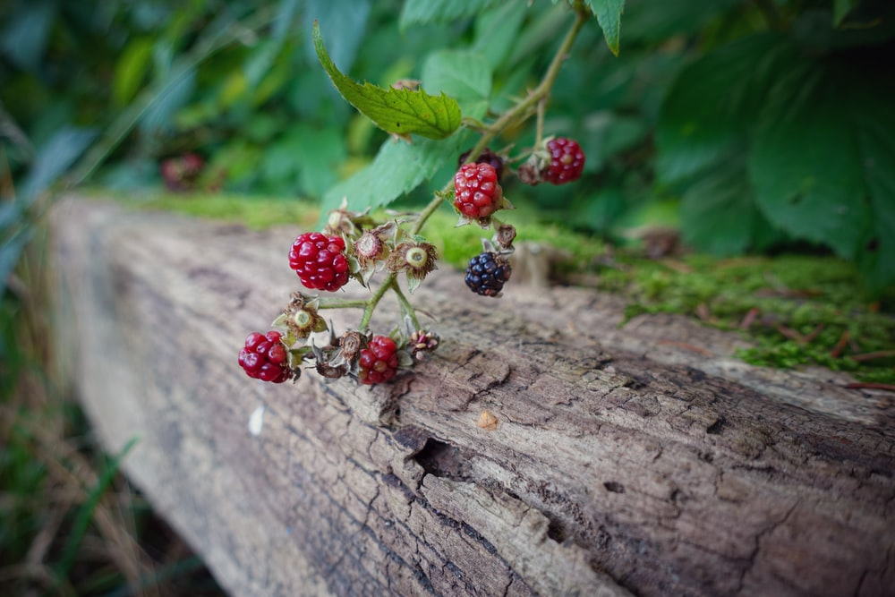 red round fruits on brown wooden log
