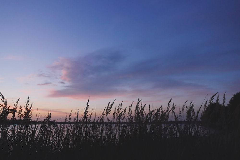 silhouette of grass under cloudy sky during sunset