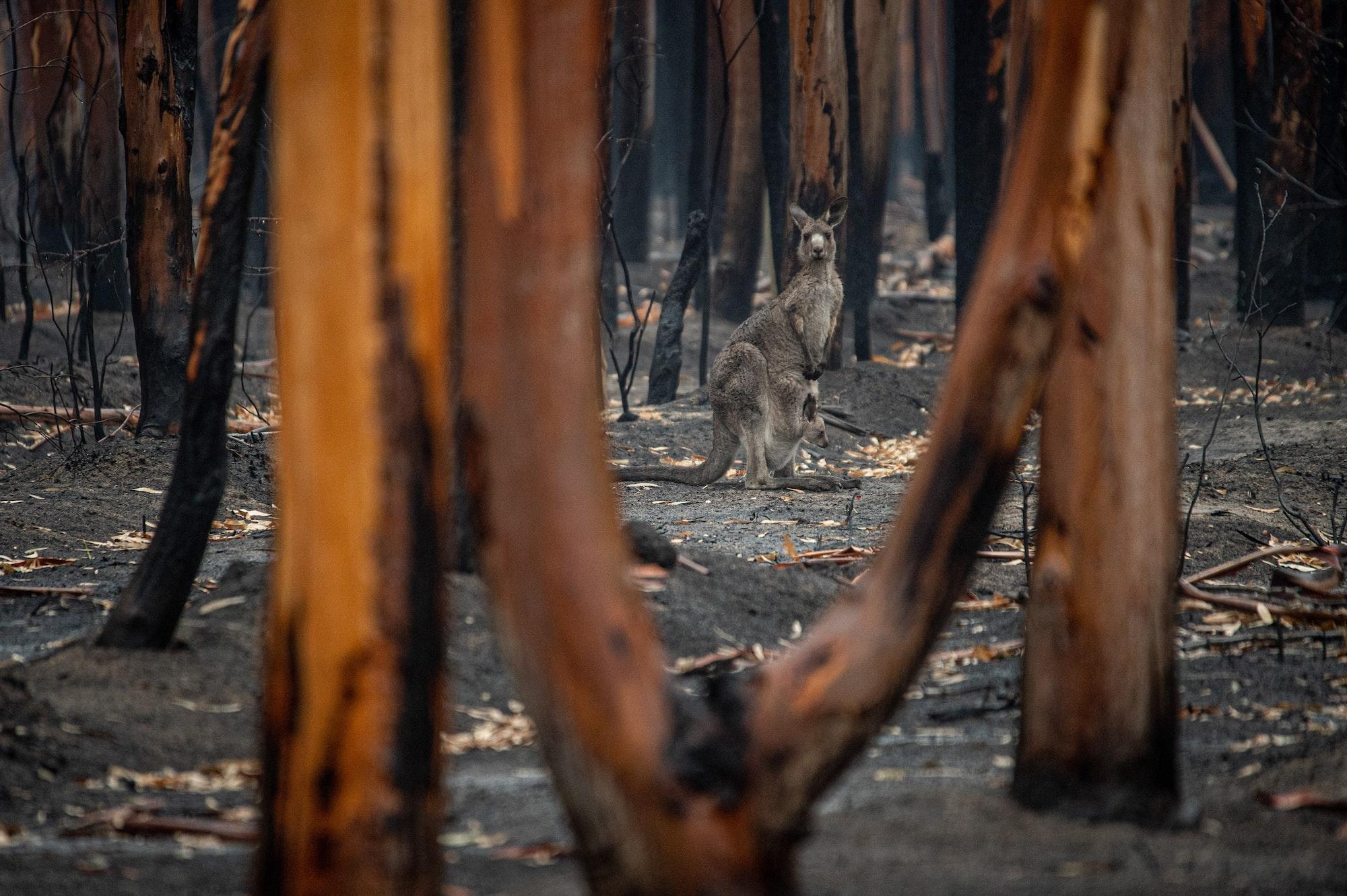 Klimaforscher: Australien isoliert sich vom Rest der Welt