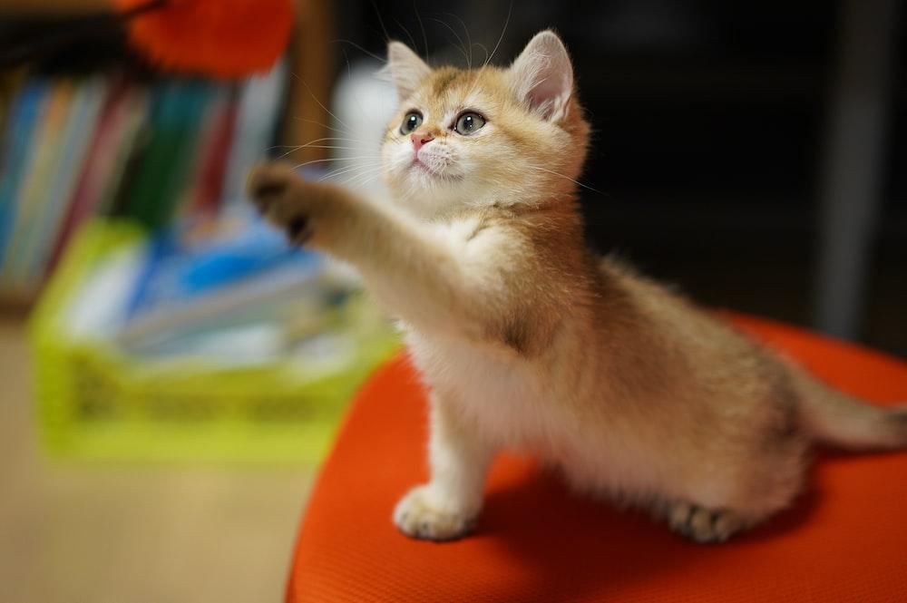 orange tabby kitten on orange chair