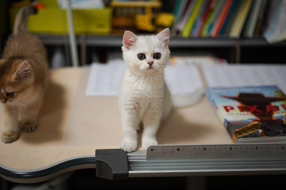 white cat on white book