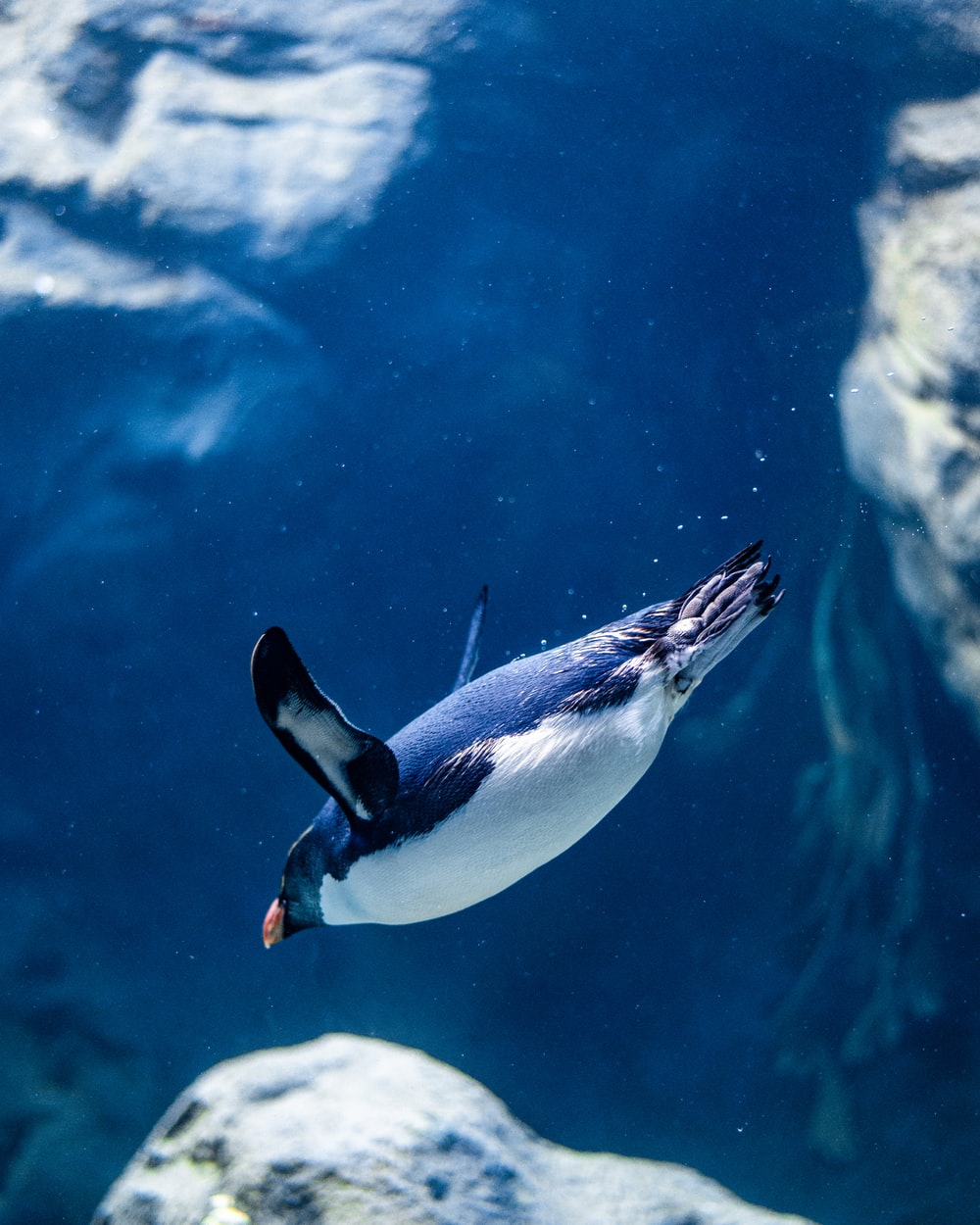 white and black penguin in water