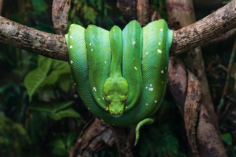 green snake on brown tree branch