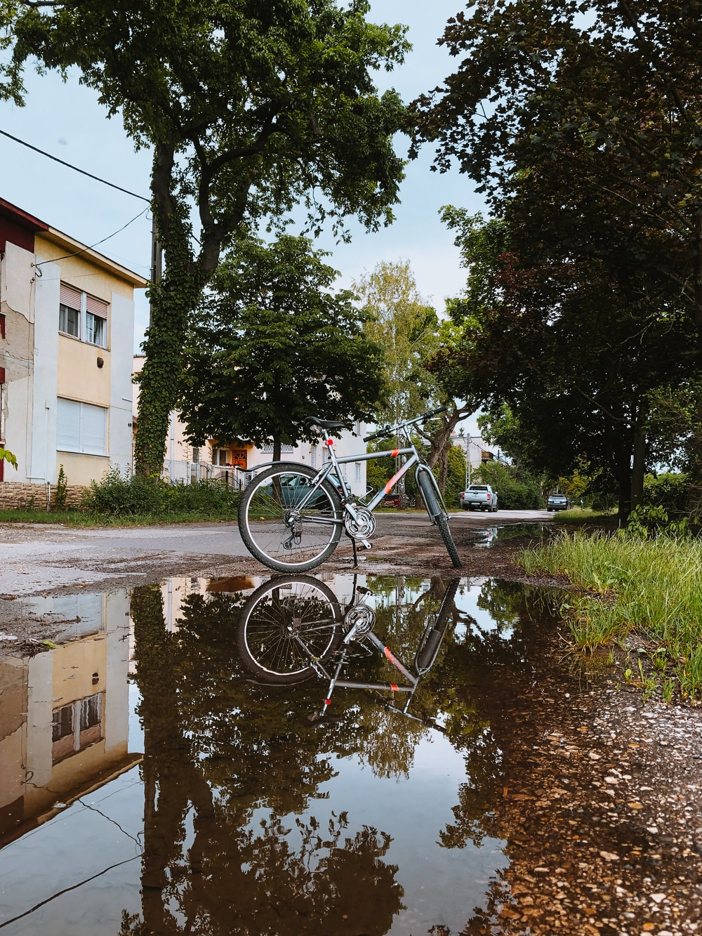 black bicycle parked beside green tree near body of water during daytime