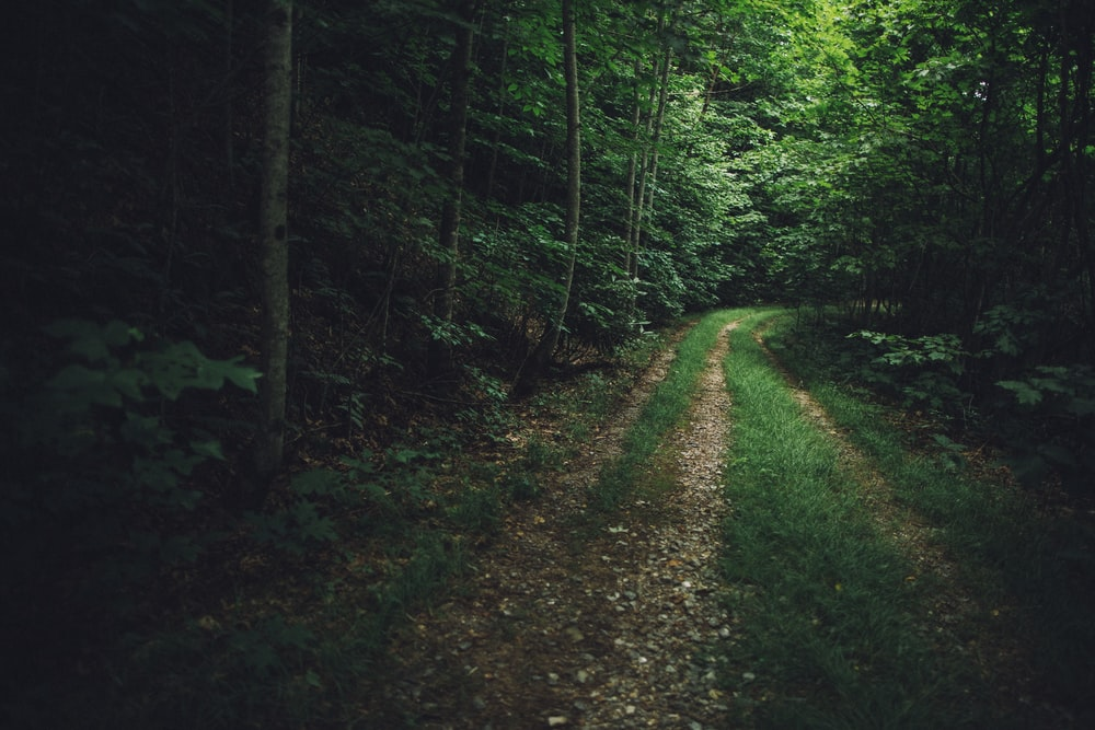 green trees and brown dirt road