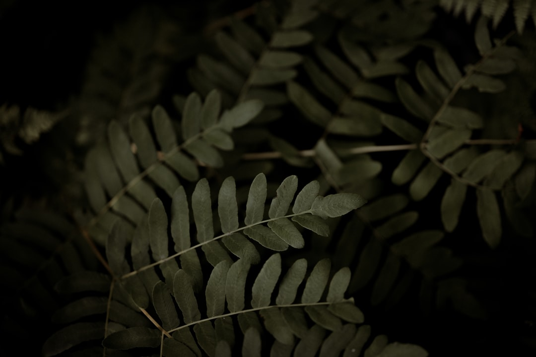 Grayscale Photo of Leaves In Dark Room - unsplash