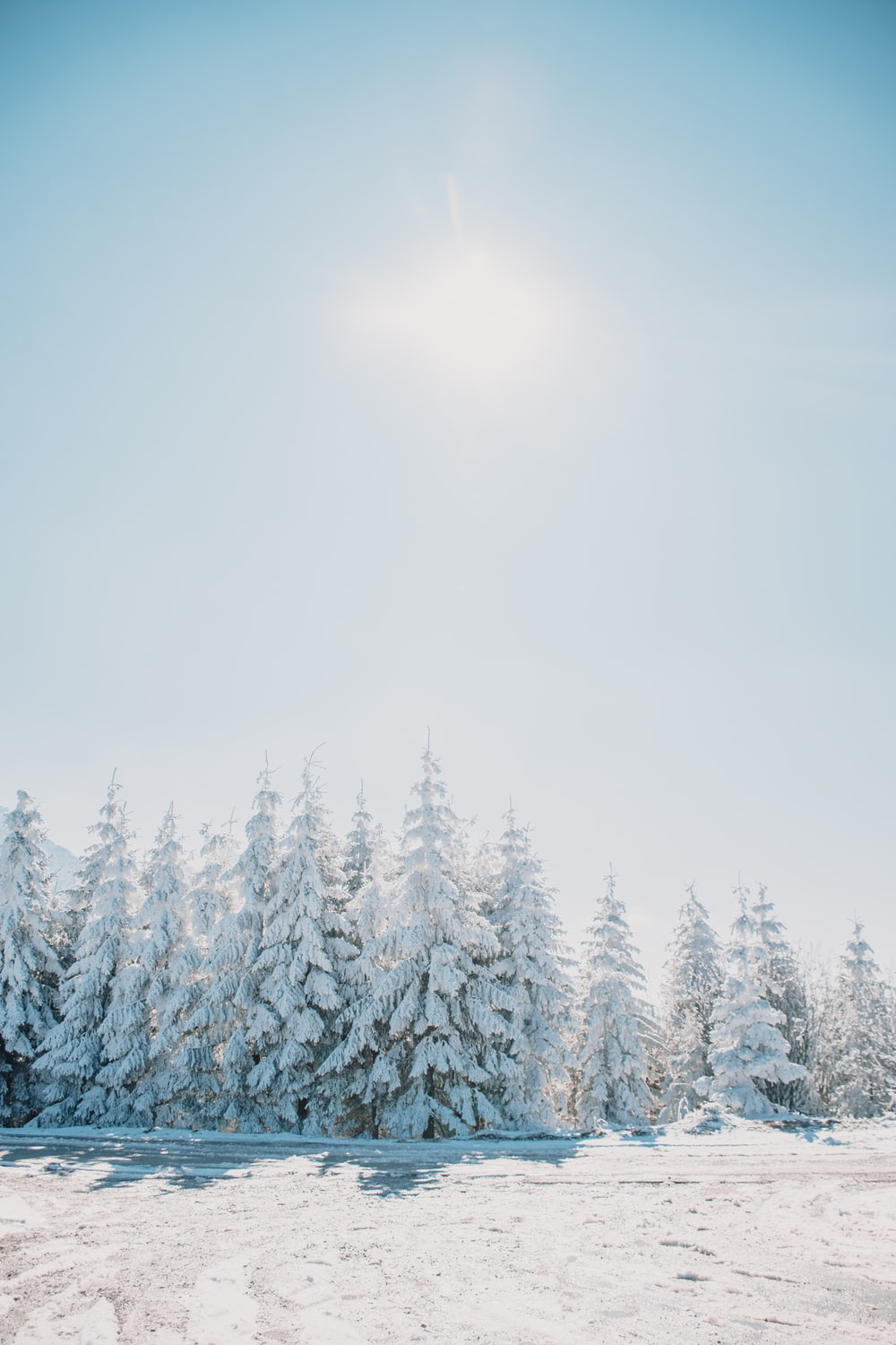 snow covered pine trees under white sky during daytime