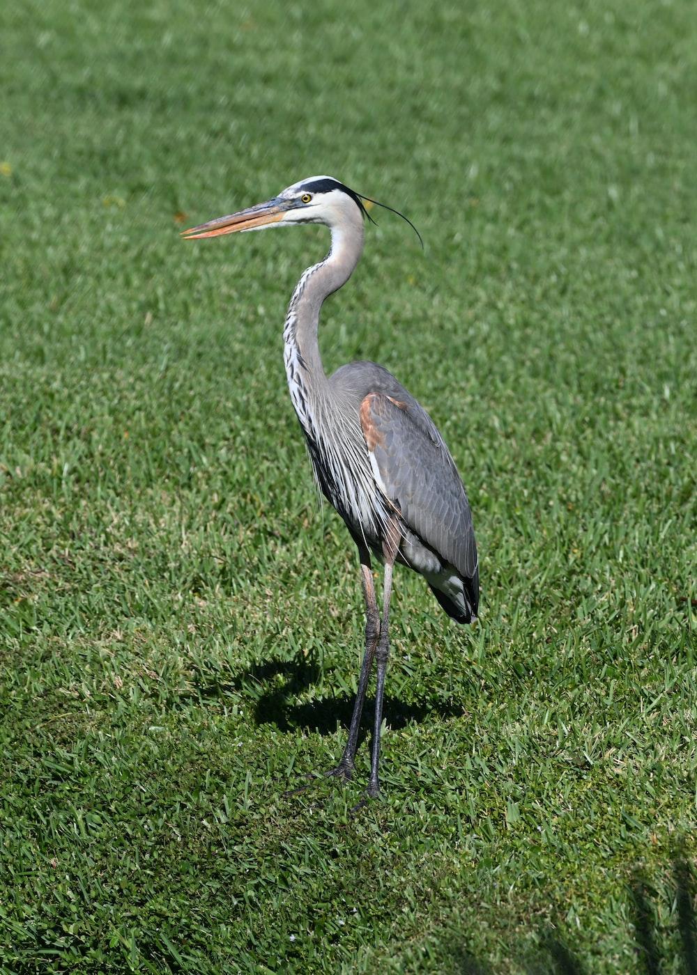 gray bird on green grass field during daytime