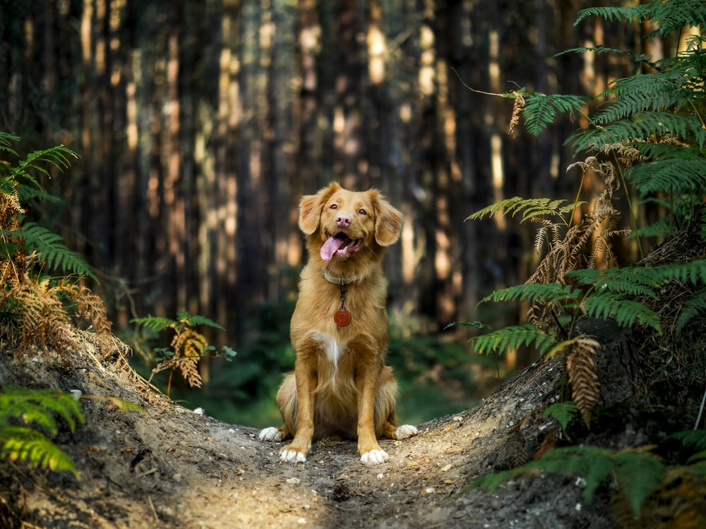 brown short coated dog on brown tree trunk