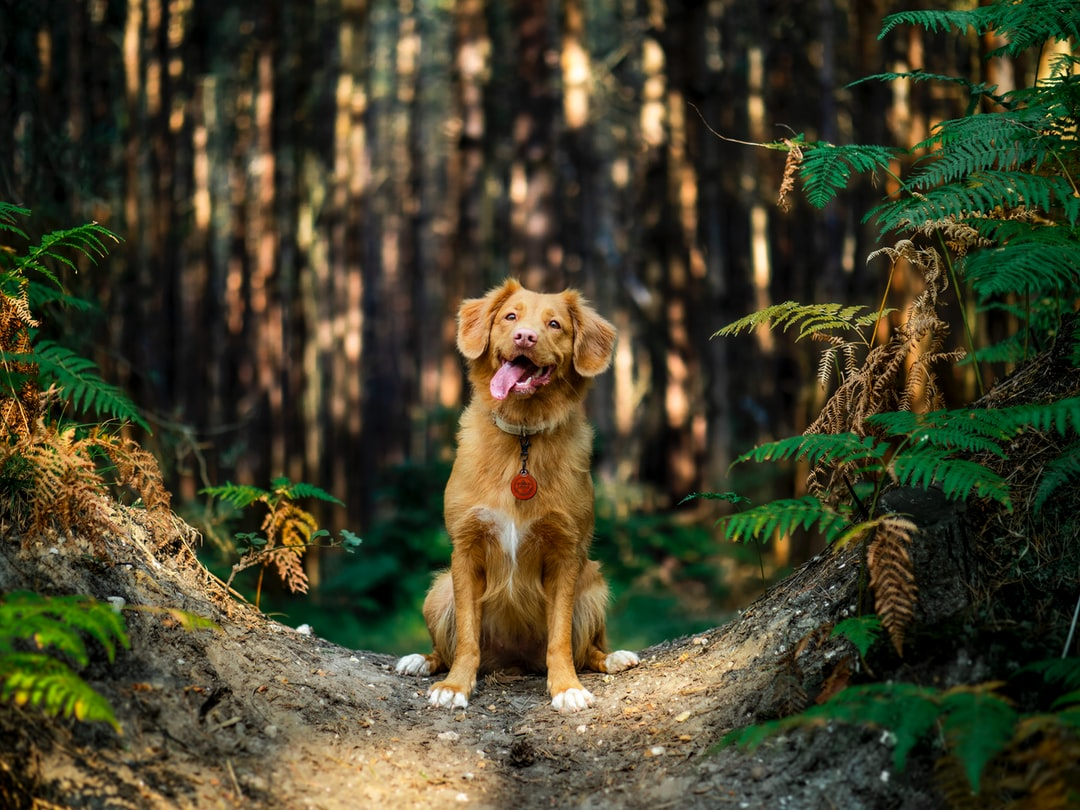 Brown Short Coated Dog On Brown Tree Trunk - unsplash