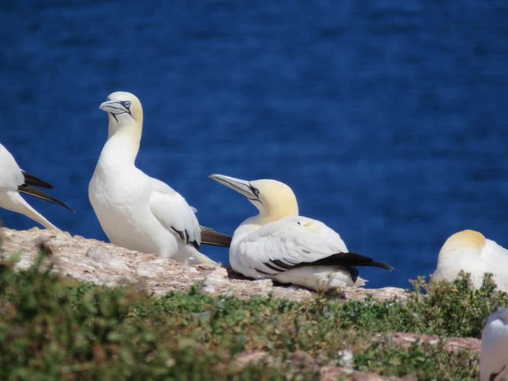 white bird on brown rock near blue sea during daytime