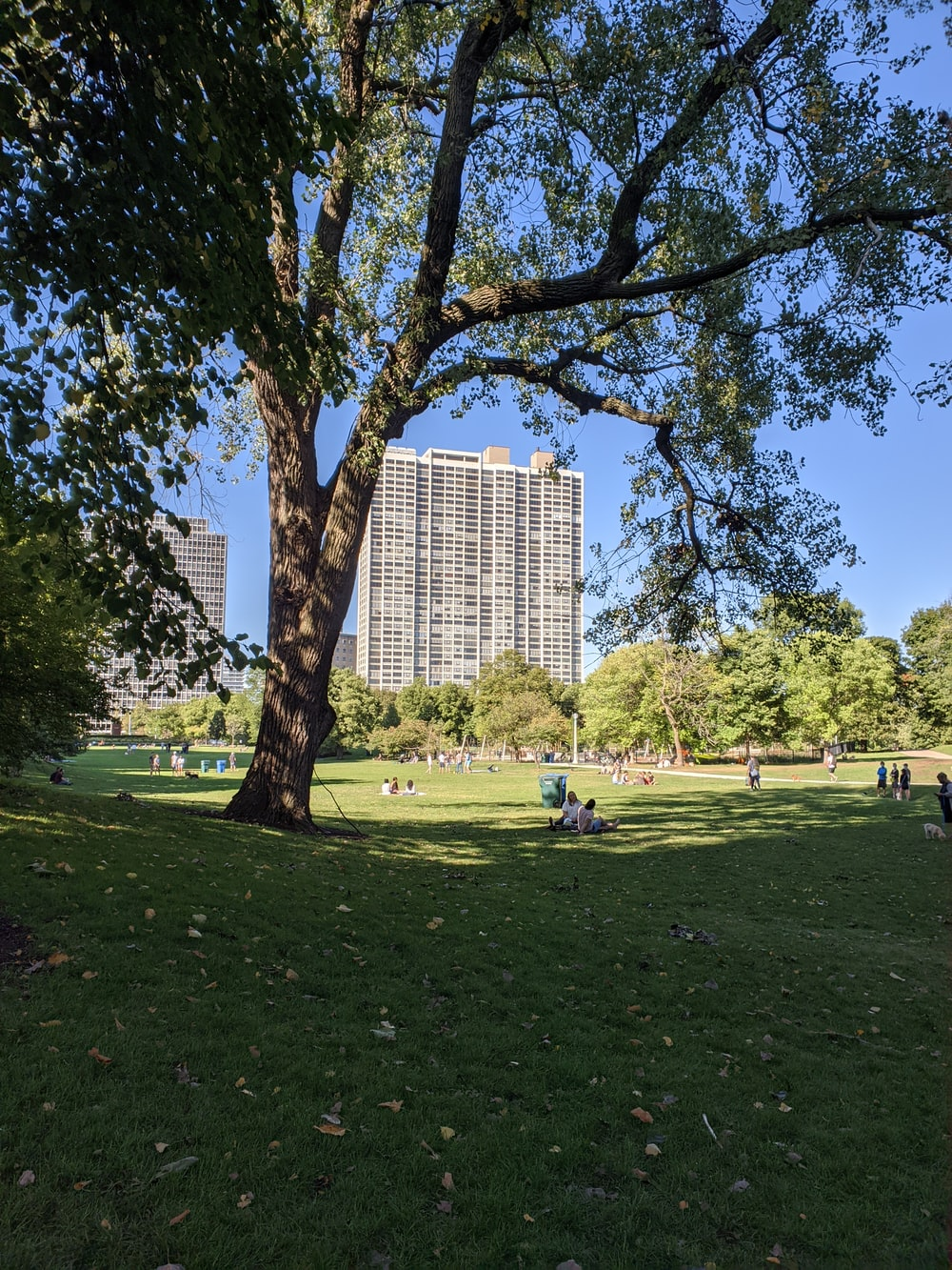 people sitting on green grass field near high rise building during daytime