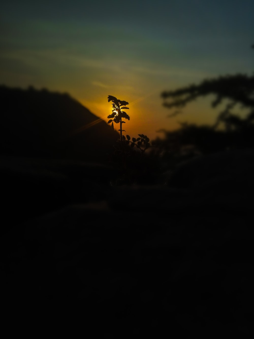 silhouette of person jumping on hill during sunset