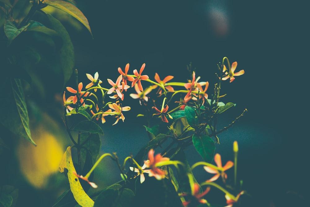 yellow and green leaves in tilt shift lens