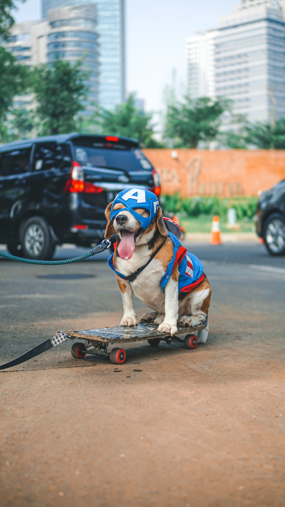 brown and white short coated dog with red and black skateboard on gray concrete road during