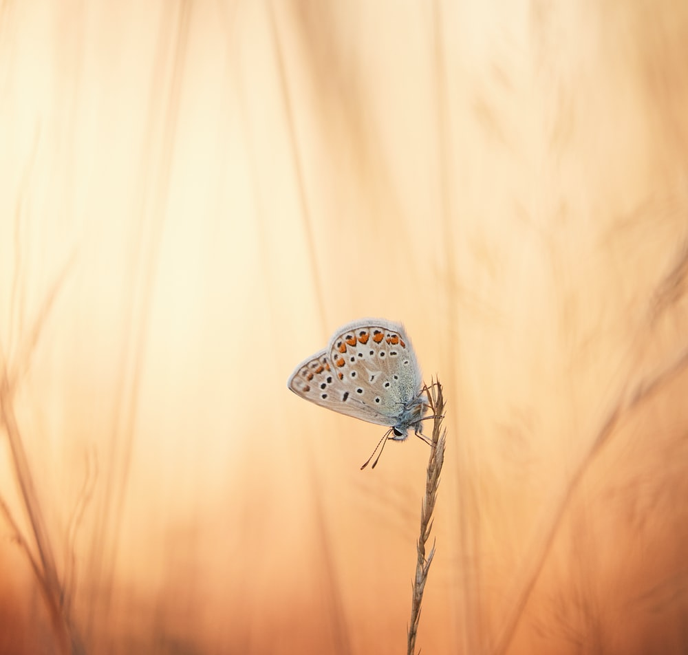 white and black polka dot butterfly on brown stick
