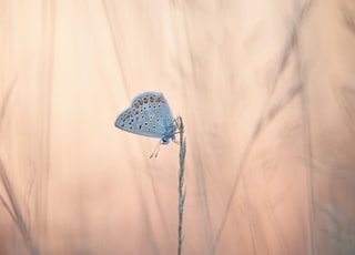 white and blue butterfly on white wall