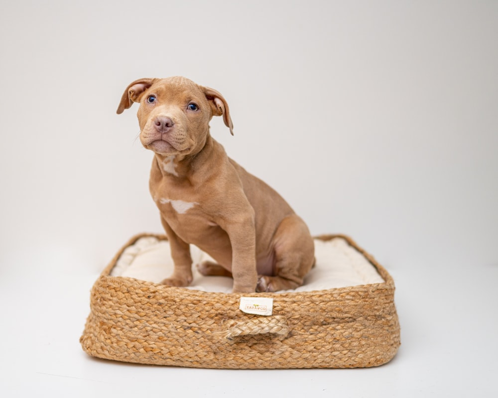 brown short coated puppy on brown wicker basket