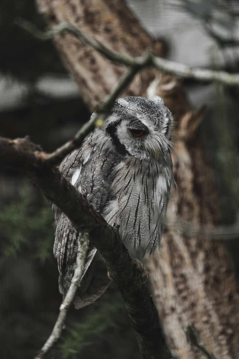 gray owl on brown tree branch during daytime