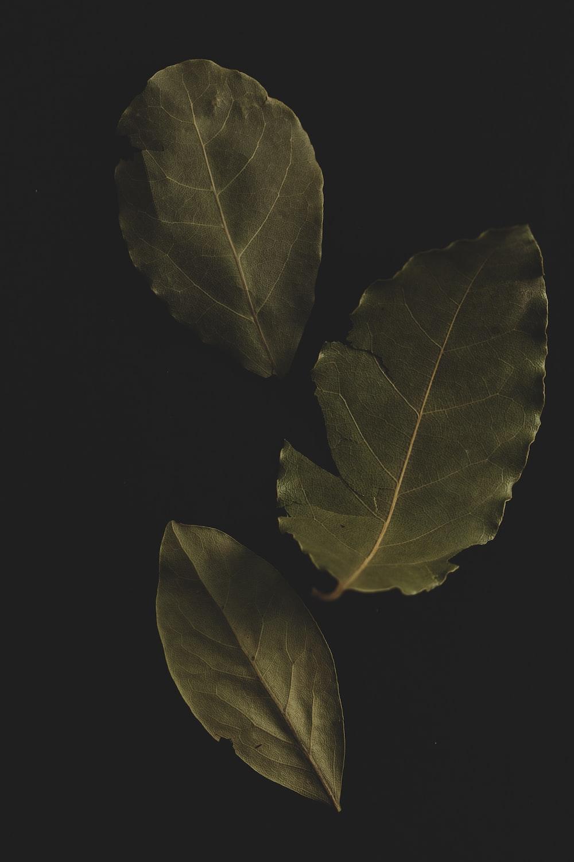 green leaves on black background