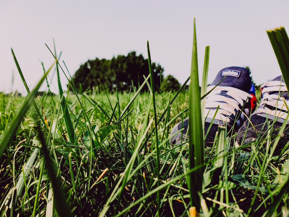 white and black adidas soccer cleats on green grass field