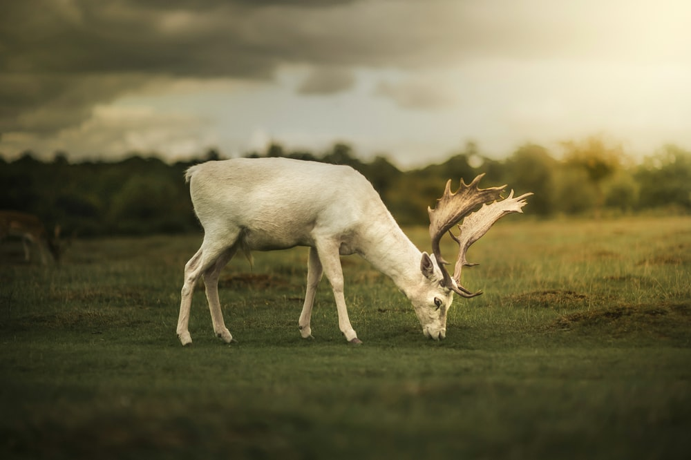 white deer on green grass field during daytime