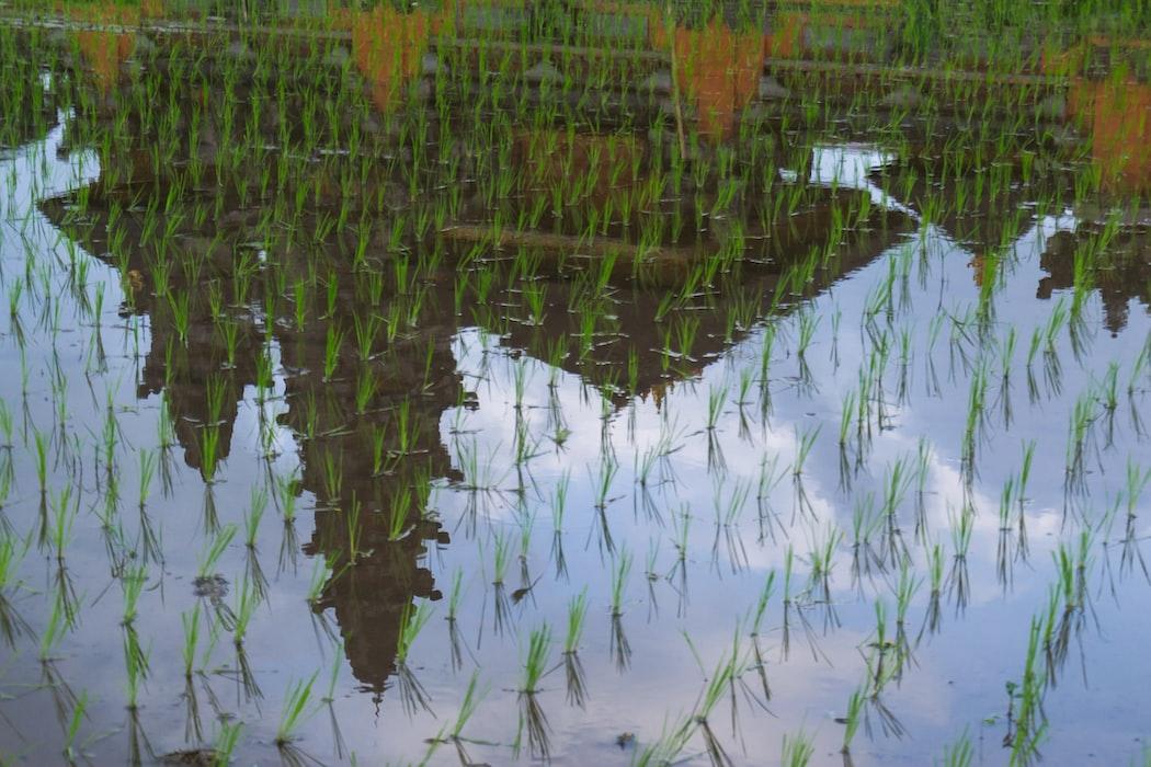 A scenic click in Ubud