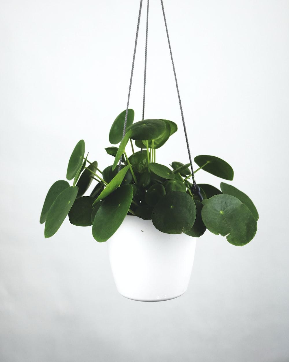 green plant in white pot