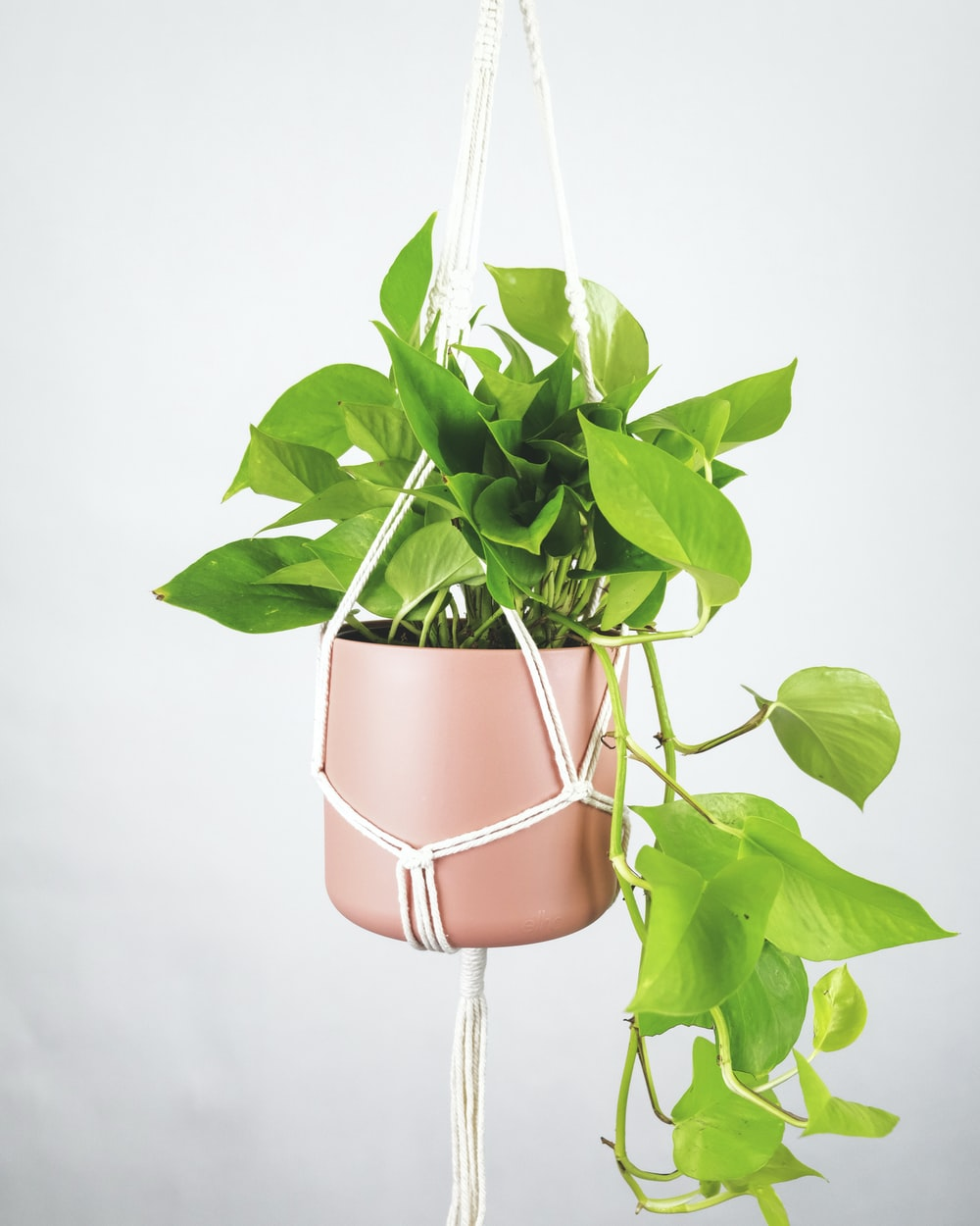 green plant on brown pot