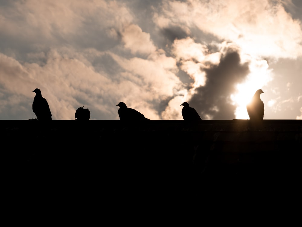 silhouette of people sitting on concrete wall during sunset